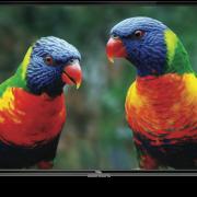 rent-smart-tv-tcl-50-fhd-led-lcd-1